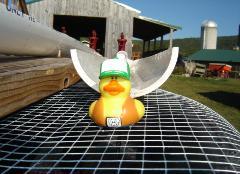 DuckRace2